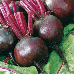 Beetroot Moneta Seeds