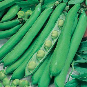 Broad Bean Masterpiece Green Longpod Seeds