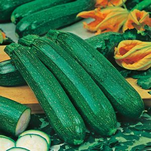 Courgette All Green Bush Vegetable Seeds