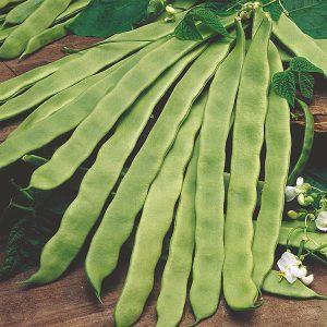 Climbing Bean Pantheon Seeds